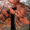 小石川後楽園36