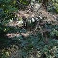小石川後楽園40