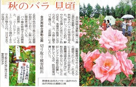 2-2017,秋バラ (2)