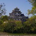Photos: 新緑の天守閣