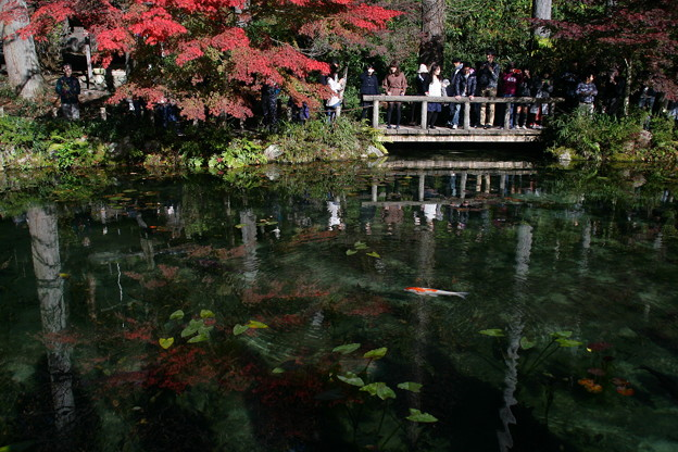 モネの池秋1