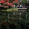 写真: モネの池秋1