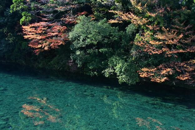 板取川の秋