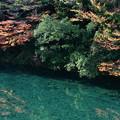 写真: 板取川の秋