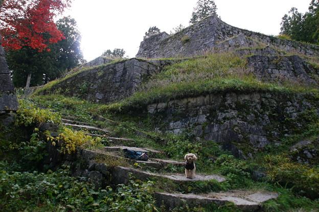 写真: 岩村城跡