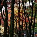 写真: 鶏足寺2