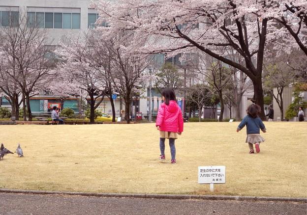 JP前広場で桜と遊ぶ-P6-0410-19