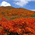 [2017年9月24日]栗駒山1