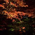 写真: 日光山輪王寺逍遥園ライトアップ
