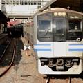 Photos: 217系快速逗子行き4414F成田1番