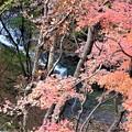 写真: 渓谷の紅葉