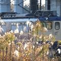 Photos: 秋色のEF65原色2139号機
