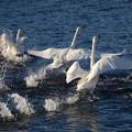 写真: 川面を翔る!