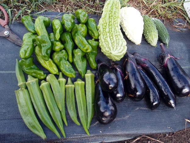 2017-09-08収穫