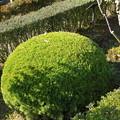 Photos: 丸刈り