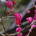 Photos: 咲いていました(合焦版)