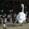 Photos: 鳥の世界でも