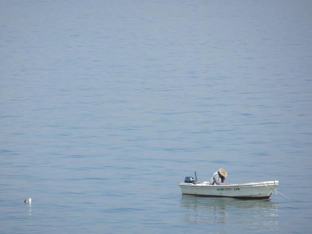 漁師とカモメ