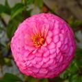 写真: 花探し