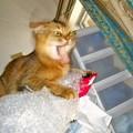 写真: CIMG1203獅子頭プリンちゃん