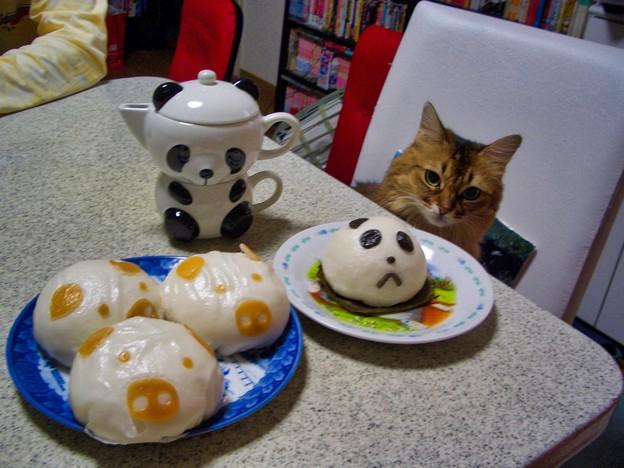 パンダまんと猫のプリンちゃん