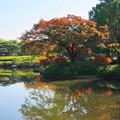171107_07_日本庭園の様子・S18200(昭和記念公園) (11)
