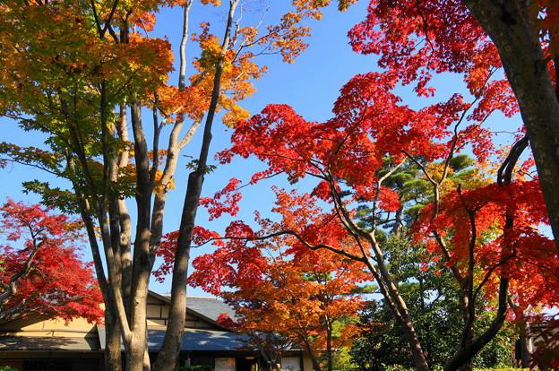 171107_07_日本庭園の様子・S18200(昭和記念公園) (36)