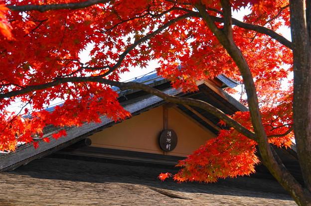 171107_07_日本庭園の様子・S18200(昭和記念公園) (43)