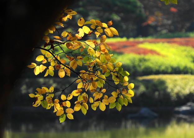 171107_07_日本庭園の様子・S18200(昭和記念公園) (104)