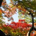 Photos: 171107_08_園内の様子・S18200(昭和記念公園) (82)