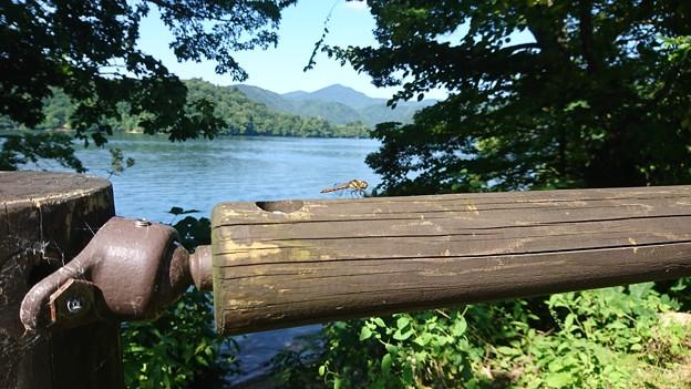 トンボと檜原湖