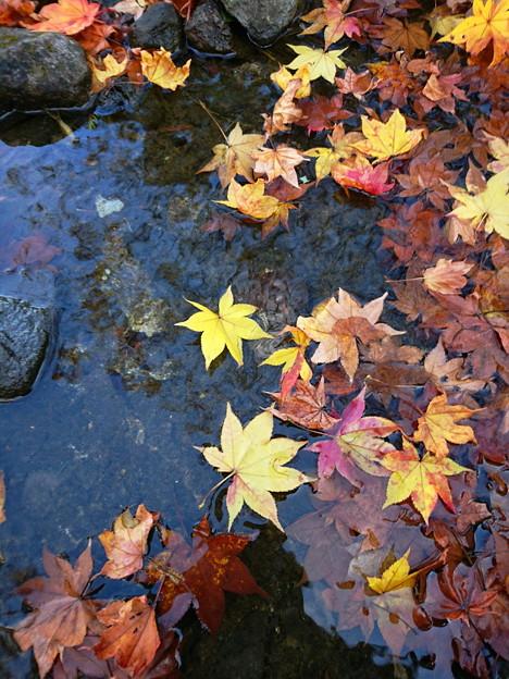 Photos: 庭園の池も