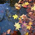 写真: 庭園の池も
