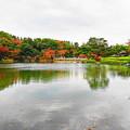 写真: 日本庭園の池のまわりも