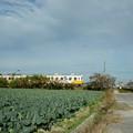 琴平線とキャベツ畑
