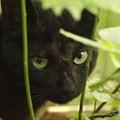 Photos: ネコさん 2