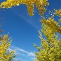 Photos: 青と黄色♪