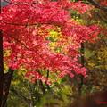 Photos: 紅葉♪