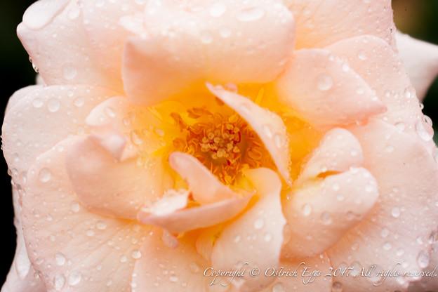 Photos: Rose-3513