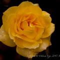 Photos: Rose-3681