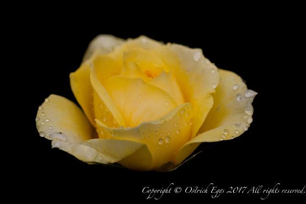 Photos: Rose-3686