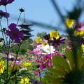 花に囲まれた五重塔