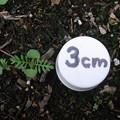 【園芸】レースラベンダー 発芽と生長|2017年[秋]