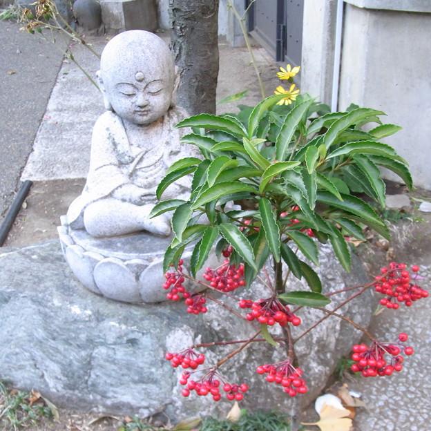 【東京|神社仏閣】 大円寺 (34)