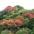 写真: 高隅山麓