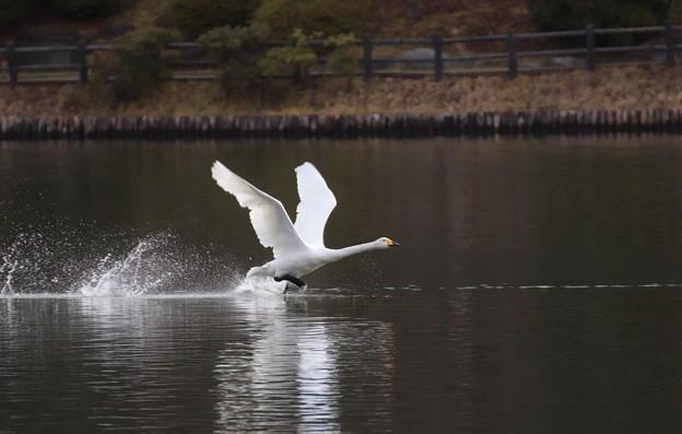 写真: 高松池 101