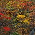 色彩爆発な秋の森