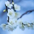 Photos: 桃かな?