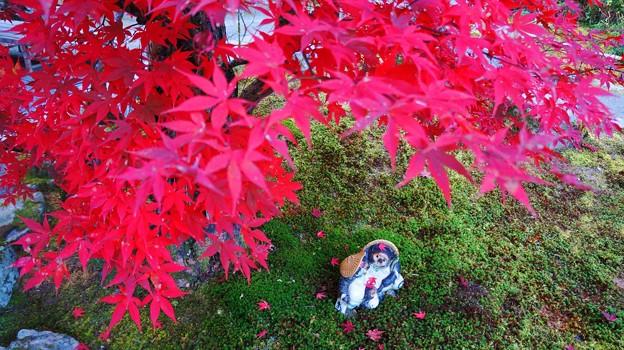 最勝院(高徳庵) たぬきさん 紅葉 京都 2014年11月23日 (4)