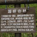 140518-8東北ツーリング・十和田湖・湖畔の林